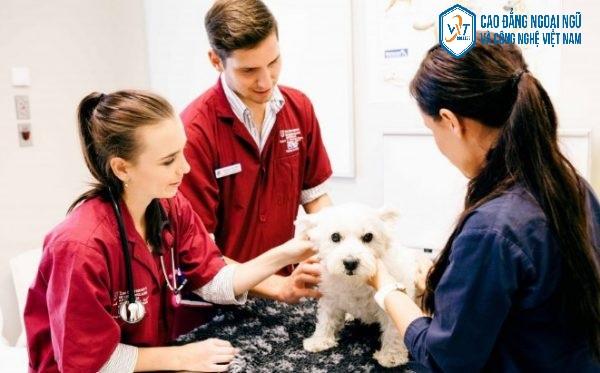 Ngành thú y đối với nữ có phù hợp không?Các trường đào tạo ngành thú y