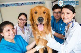 Ngành thú y nên học trường nào? Top những trường đào tạo thú y?
