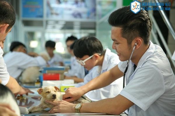 ngành thú y nên học trường nào