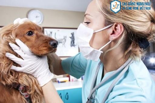 Những triển vọng nghề nghiệp của ngành thú y trong tương lai