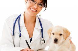 Dược lý thú y là gì? Và học thú y ra trường có thể làm những gì?